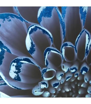 Cuadro 55x55 flor azul