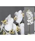 Orquídea phalaenopsis blanca 58,5 cm