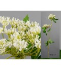 Zebrina blanca 70 cm