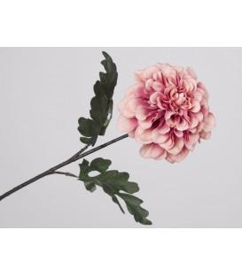 Zinnia rosa 78x13 cm