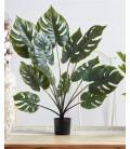 Planta Slit Philo 90 cm