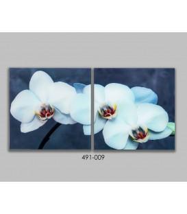 S/2 Cuadros cristal Orquídeas 30x30 cm
